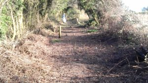 Dead trees, brambles - and stumps - removed.  Trackbed path raked and levelled.