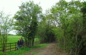 Wenhaston guided walk