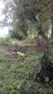 Vegetation clearance for drainage