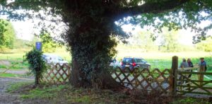 The view from the road - dominated by our (well, SCC's) oak